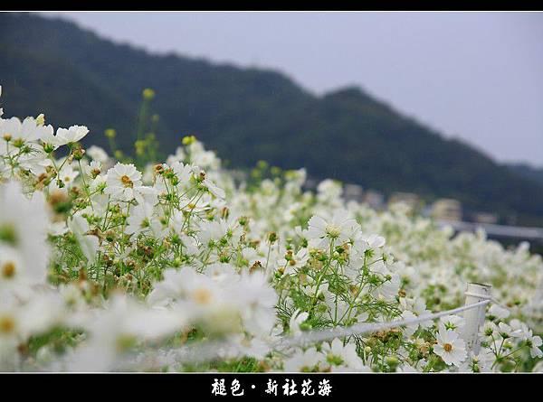 褪色‧新社花海 (09).JPG