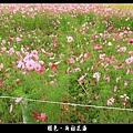 褪色‧新社花海 (12).JPG