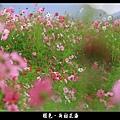 褪色‧新社花海 (14).JPG