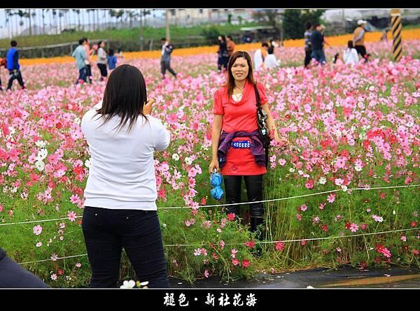 褪色‧新社花海 (30).JPG