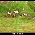 褪色‧新社花海 (31).JPG