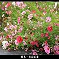 褪色‧新社花海 (33).JPG