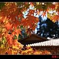 福壽山楓情畫 (06).JPG
