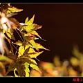 福壽山楓情畫 (09).JPG