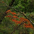 紅楓谷 (10).JPG