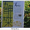 莿桐向日葵迷宮 (31).JPG