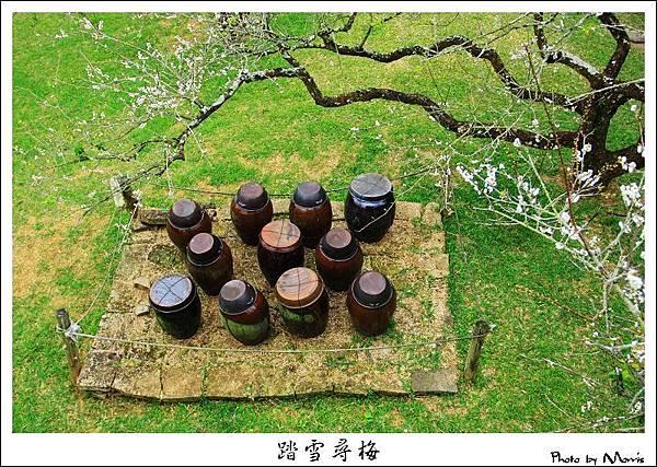 2009信義踏雪尋梅 (01).JPG