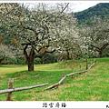 2009信義踏雪尋梅 (06).JPG