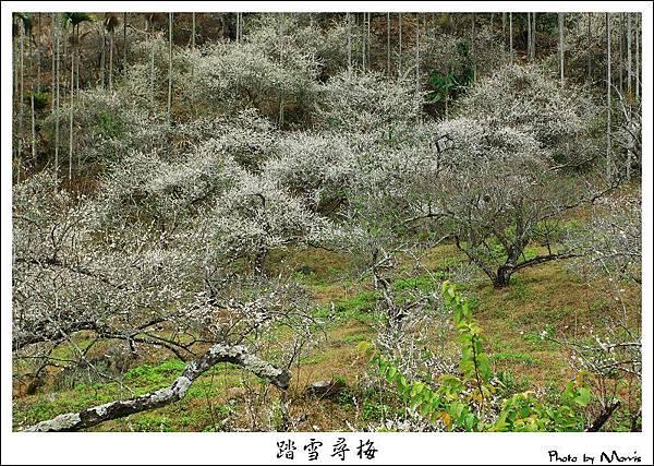 2009信義踏雪尋梅 (13).JPG