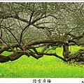 2009信義踏雪尋梅 (17).JPG