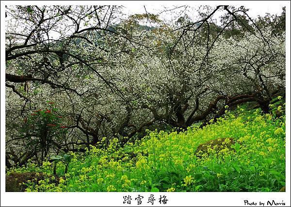 2009信義踏雪尋梅 (23).JPG
