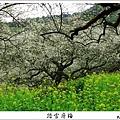 2009信義踏雪尋梅 (28).JPG