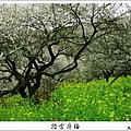 2009信義踏雪尋梅 (30).JPG