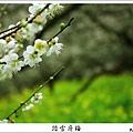 2009信義踏雪尋梅 (31).JPG