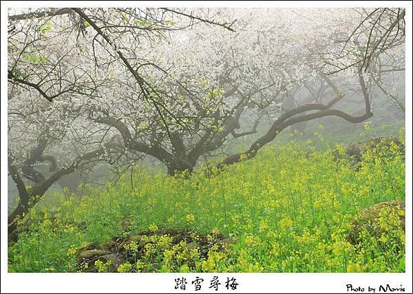烏松崙踏雪尋梅 (03).JPG