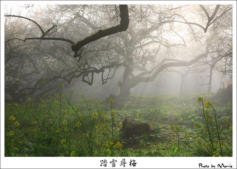 烏松崙踏雪尋梅 (06).JPG