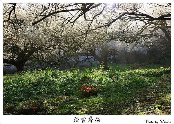 烏松崙踏雪尋梅 (12).JPG