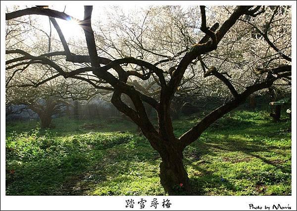 烏松崙踏雪尋梅 (14).JPG