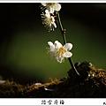 烏松崙踏雪尋梅 (32).JPG