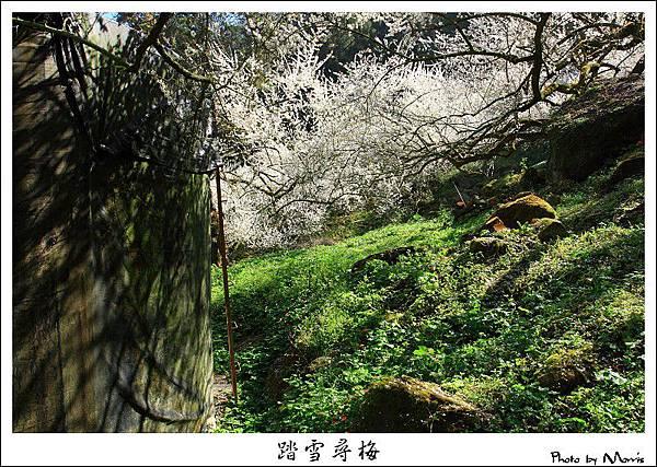 烏松崙踏雪尋梅 (43).JPG