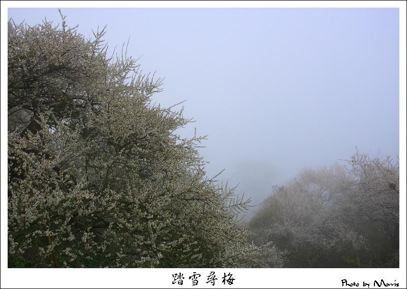 烏松崙踏雪尋梅 (01).JPG