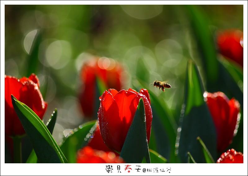 鬱見春天桃源仙谷 (01).JPG