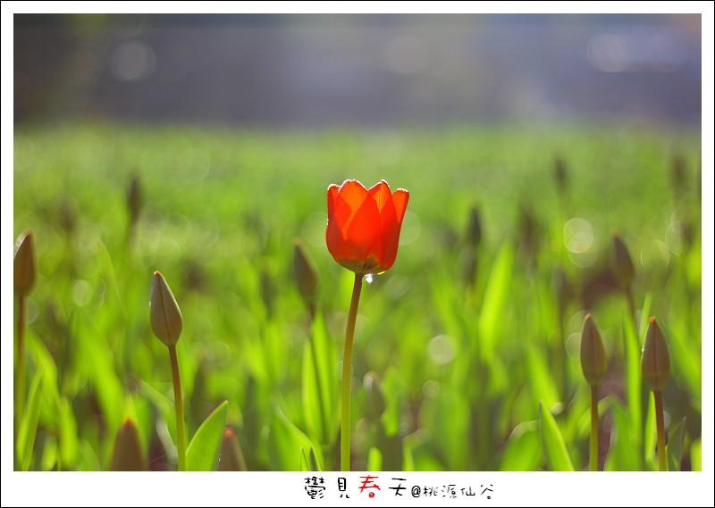 鬱見春天桃源仙谷 (02).JPG