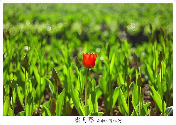 鬱見春天桃源仙谷 (03).JPG