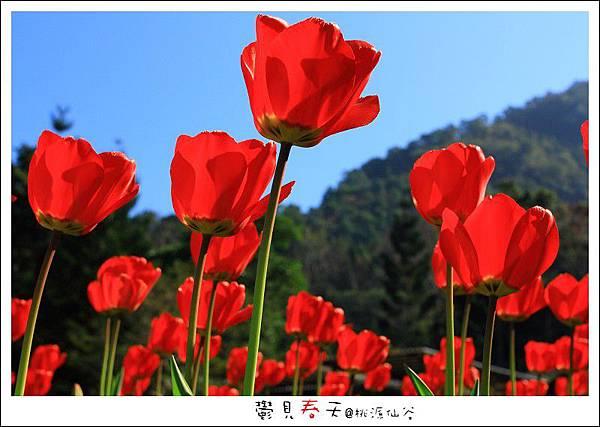 鬱見春天桃源仙谷 (08).JPG