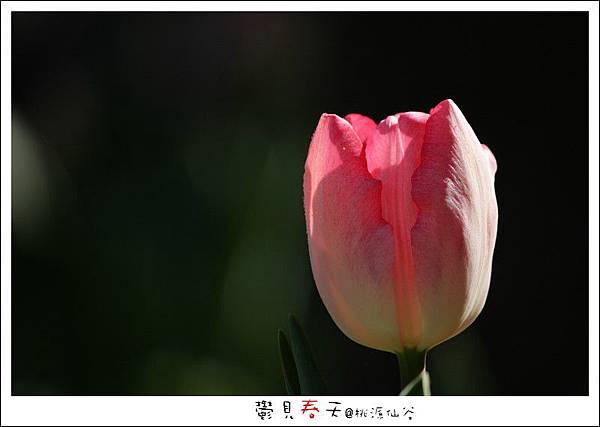 鬱見春天桃源仙谷 (13).JPG