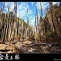 天然紙廠‧忘憂森林 (08).JPG