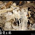 天然紙廠‧忘憂森林 (14).JPG
