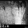 天然紙廠‧忘憂森林 (19).JPG