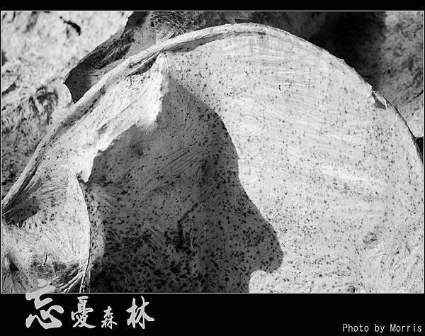 天然紙廠‧忘憂森林 (28).JPG