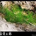天然紙廠‧忘憂森林 (33).JPG