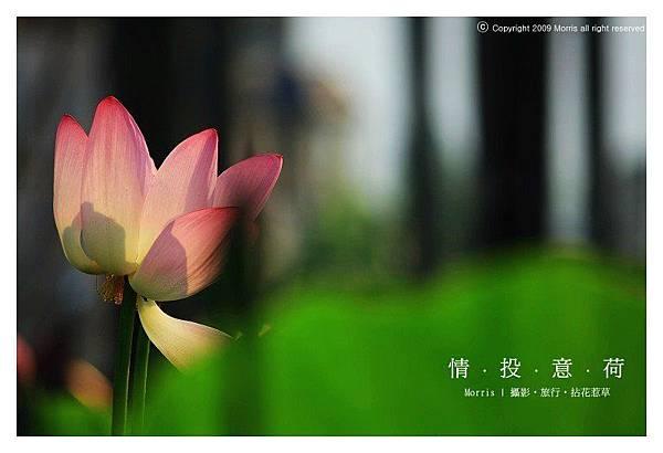 情投意荷 (03).JPG