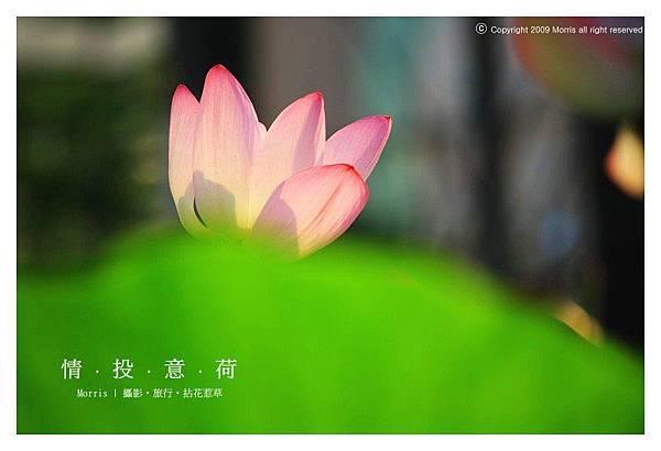 情投意荷 (04).JPG