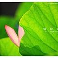 情投意荷 (05).JPG