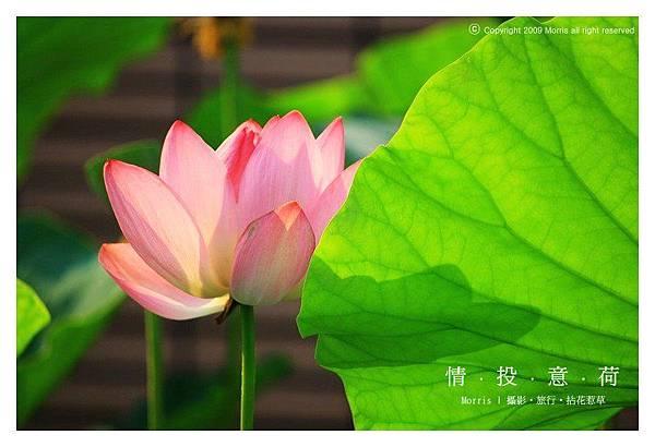 情投意荷 (06).JPG