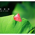 情投意荷 (07).JPG