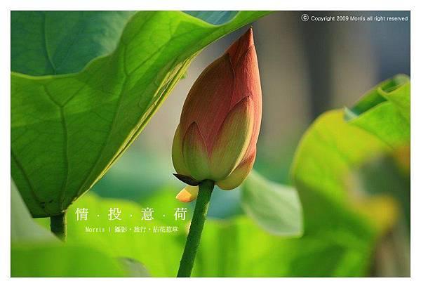 情投意荷 (09).JPG