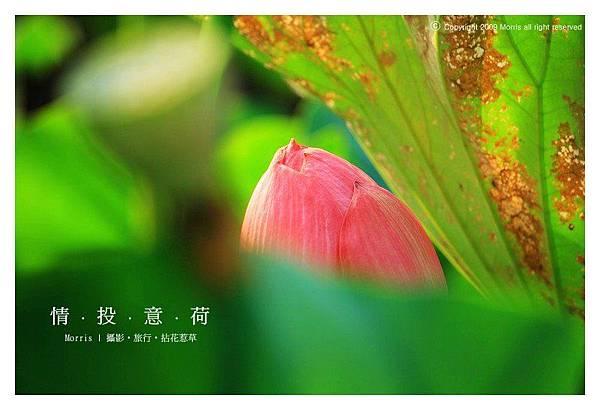 情投意荷 (11).JPG