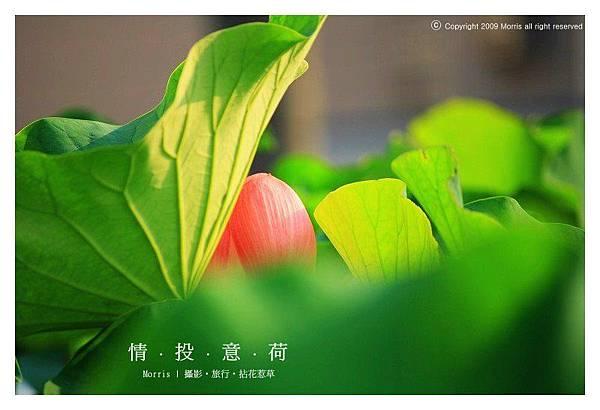 情投意荷 (12).JPG