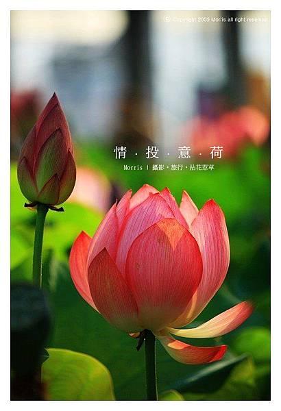 情投意荷 (17).JPG