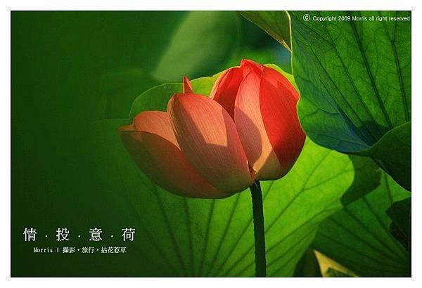 情投意荷 (24).JPG