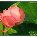 情投意荷 (26).JPG