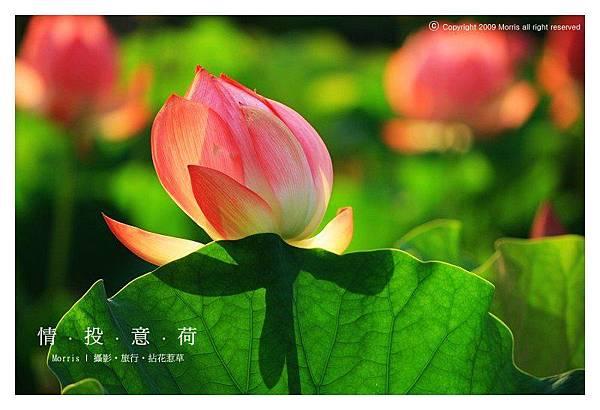 情投意荷 (27).JPG