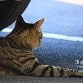 淡水有貓 (01).JPG