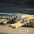 淡水有貓 (05).JPG