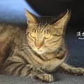 淡水有貓 (07).JPG